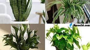 اسم نبات بحرف ن النون